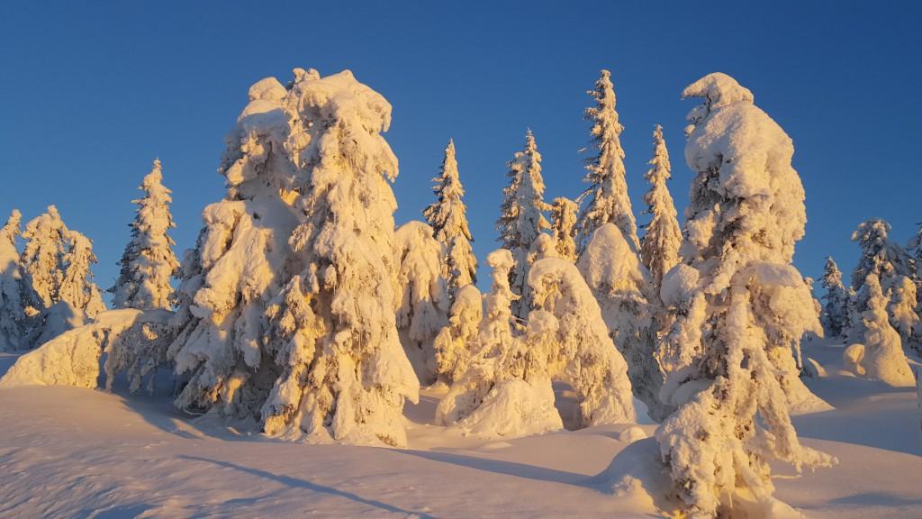 Vinterlandskap på leiehytte